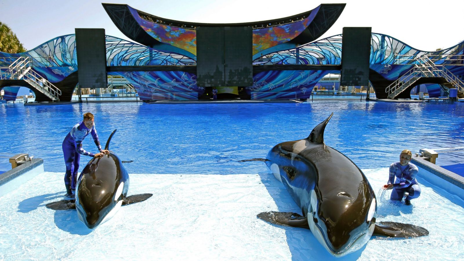 FILE - In this April 10, 2014, file photo, SeaWorld trainer Ryan Faulkner, left, with killer whale Melia, and Michelle Shoemaker, right, with Kayla work on a routine for a show at the Orlando, Fla., theme park. SeaWorld Parks & Entertainment is partnering with a United Arab Emirates company to build a theme park in Abu Dhabi in what will be the first SeaWorld park outside the United States and without orcas. Officials with SeaWorld and Abu Dhabi-government-backed Miral Asset Management said Tuesday, Dec. 13, 2016, that the SeaWorld park will open in 2022 in Abu Dhabi's Yas Island, a man-made island that is fast becoming a tourism and entertainment center. (AP Photo/John Raoux, File)